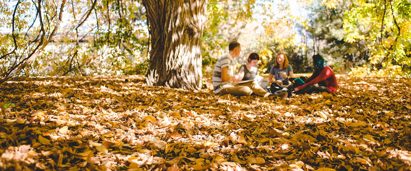 students study under large weeping elm tree